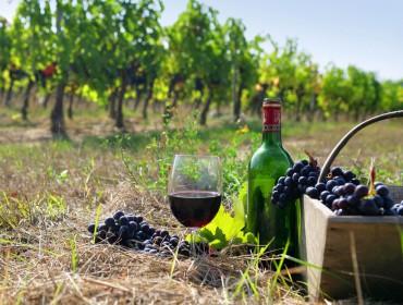 Areni Wein