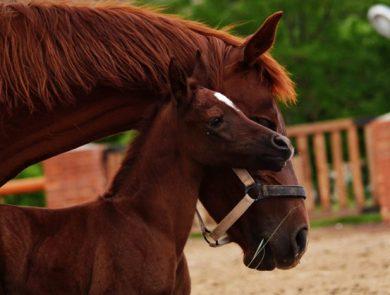 Apaga Resort (horse riding)