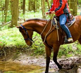 Верховая езда в Дилижане