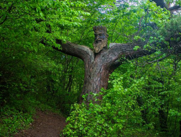 """The king of the forest"" sculpture"