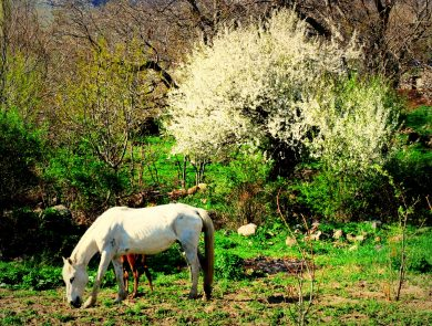Horse riding, Armenia vacation packages