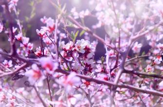 Frühling in Armenien