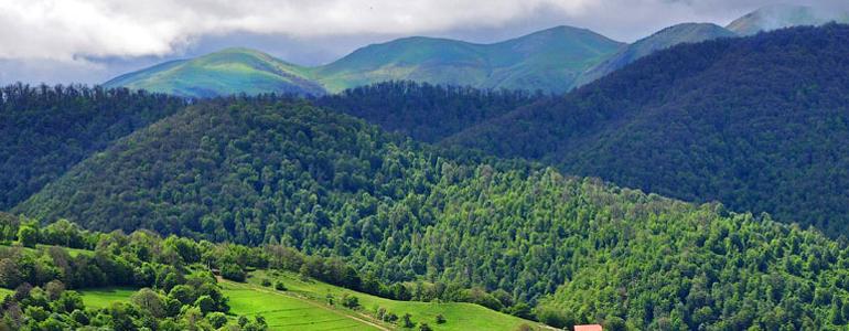 Հայաստանի ֆլորան, հանգիստը Հայաստանում