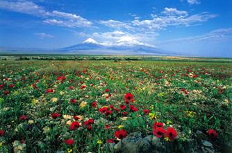 Flora in Armenien
