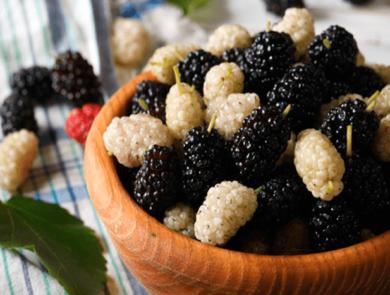 Mulberry festival