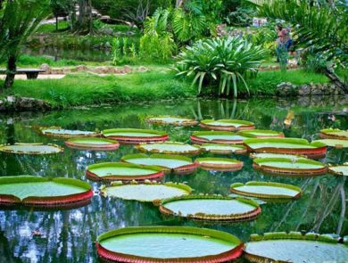 Ботанический сад Рио де Жанейро