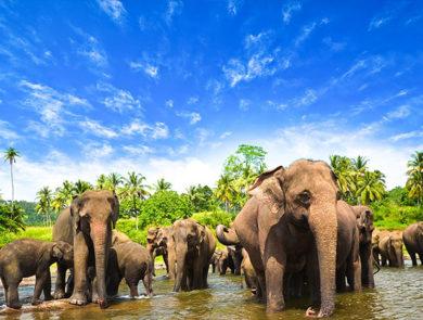 Unforgettable rest in Sri Lanka