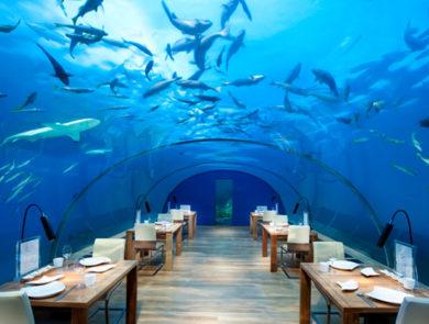 Conrad Rangali Island restaurant