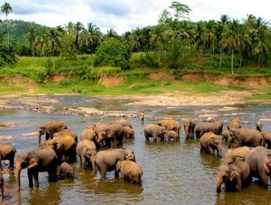 Elephant Orphanage, Kandy Sri-Lanka