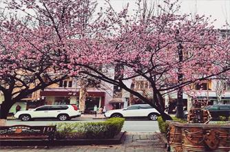 Abovyan street in spring