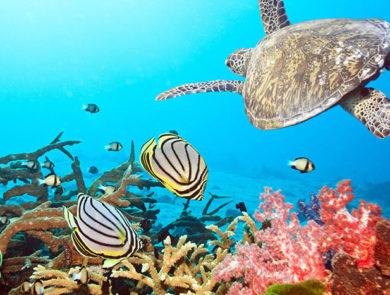 Sea animals, Maldives