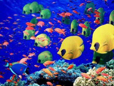 Underwater World of Maldives