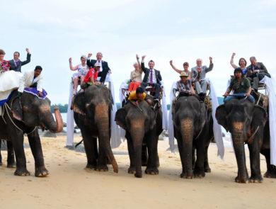 Wedding on the elephants