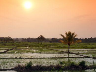 Sri Lanka Field