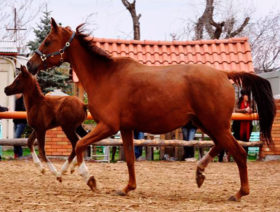 "Horse Riding in ""Ayrudzi"" riding club"
