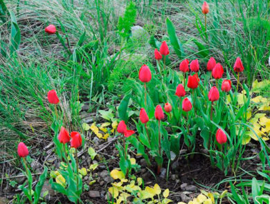 Flora of Mount Ara