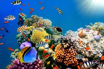 Ծովային կենդանիներ
