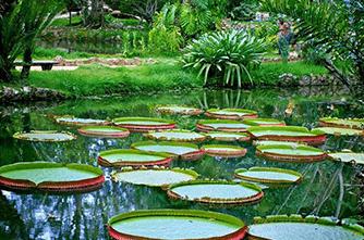 Ботанический сад, Рио де Жанейро