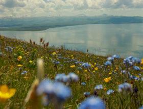 Гора Артаниш