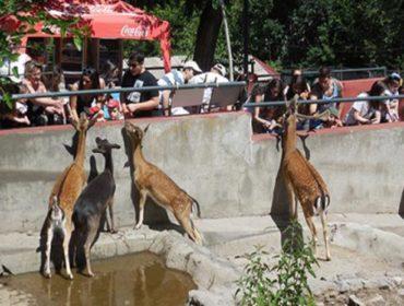 Կենդանաբանական այգի