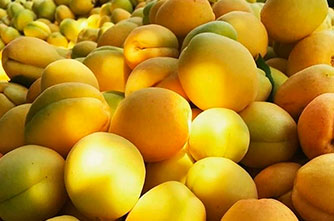 Fragrant Apricots