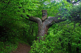 King of the Forest, Dilijan